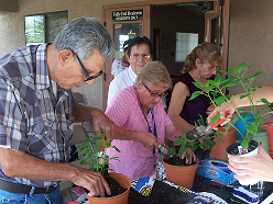 Adults gardening in potted plants